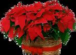 ChristmasFlowers by KmyGraphic