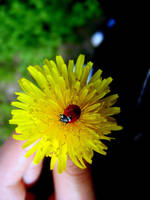 Ladybug by vampirella-th