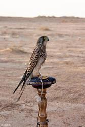 Sparrowhawk by IDEAI