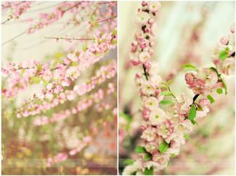 Vanilla blossom by Strawberry-Mood