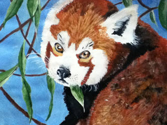 Red Panda by MangaMadness09