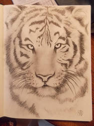 SketchBook: Tiger by Color-Droplet