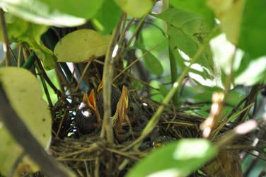 Nest by HeimdallRD