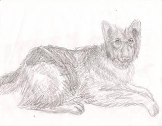 German Shepherd Sketch by dhmanga186