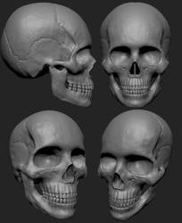 Human Skull Study by MasterPrior