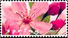 Spring Stamp 2 by CatherineHH