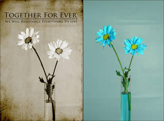 Together For Ever Editing by OmarAziz