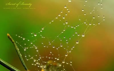 Secret of Beauty by OmarAziz