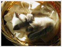 Sleepy Little One by skydragondancer