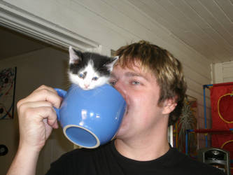 Cup of Kitty by MadForHatters