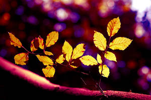 Disco Leaves by Kaddieee