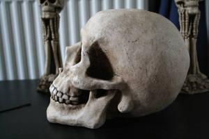 Skull 3 by TwiggXstock