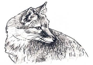 Swift Fox sketch by silvercrossfox
