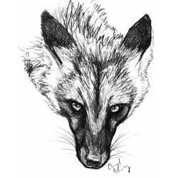 Fox Stare by silvercrossfox