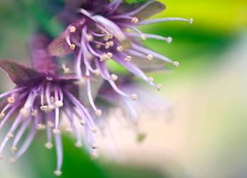 flower 16 by KateJones92