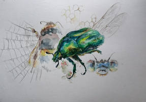 insects  by Wolfad9