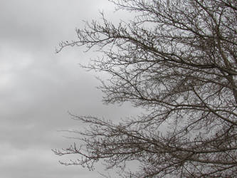 Winter Sky by canology