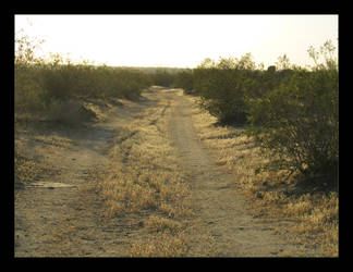 Desert Road by canology