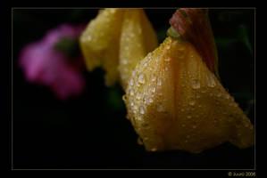 Rainy Night by Juuro