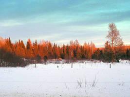 Trees Bathing in Sunbeam by JocelyneR