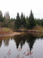 Peaceful Stream in Spring by JocelyneR