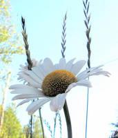 Daisy in the Woods... by JocelyneR