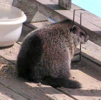 My Baby Groundhog by JocelyneR