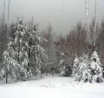 The Backyard in Winter by JocelyneR