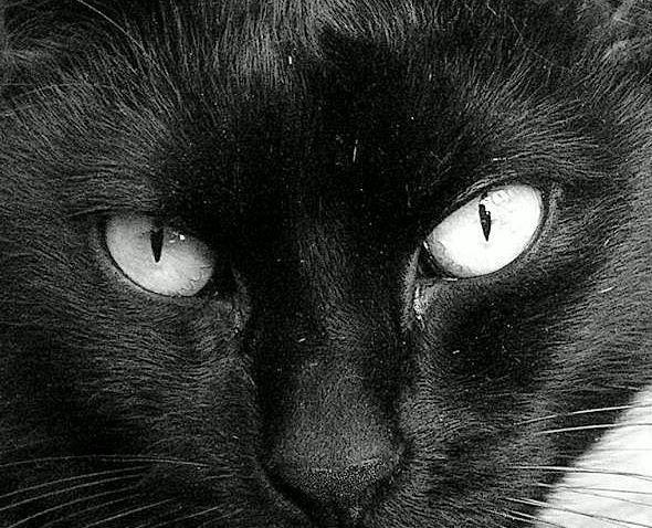 Poupi's Eyes - BW by JocelyneR