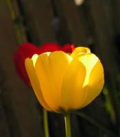 A Scent Of Spring by JocelyneR