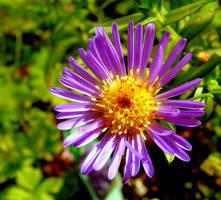 Lovely Violet Carpet - for Lou by JocelyneR