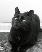 Oh Poupine, that gaze again BW by JocelyneR
