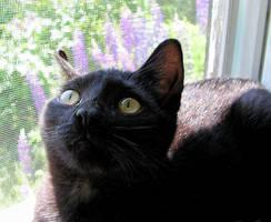 Little Kitty so Curious by JocelyneR