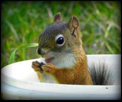 Happy Squirrel 02 by JocelyneR