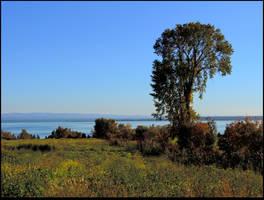 A Field in Fall by JocelyneR