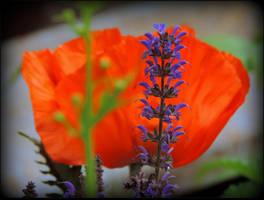 Colors of Summer by JocelyneR
