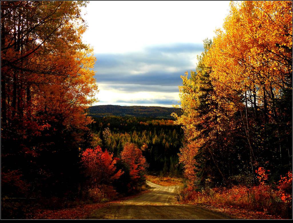 Forest Road At Sunset by JocelyneR