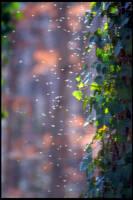 Fairies by churra