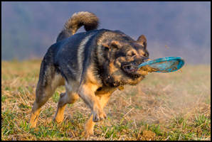 Gotcha! by Wolfling01