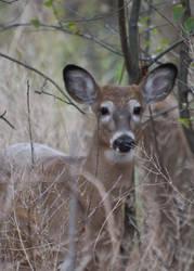 Doe a Deer by elegantlywasted84