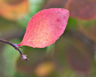 Coloured Leaf by elegantlywasted84