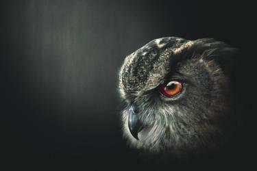 An Owl's Wisdom by SaviourMachine