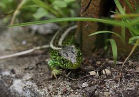 Makro Lizard by Shiryuakais
