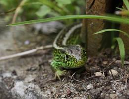 Little lizard by Shiryuakais