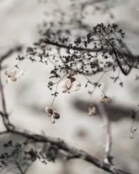 Homesick by Karine-Despeaux