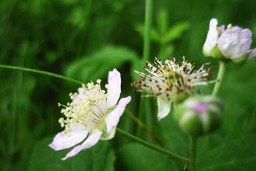 kwiatuszek 3 by s-carinn