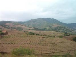 Pyrenees Vines by AJChimaera