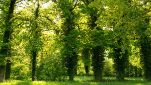 A Green 13th May by jant-photo