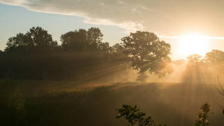 Golden Morning by jant-photo