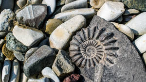 Ammonite by jant-photo